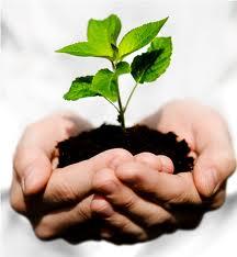 Nyt fra Harvard: CSR-rapportering virker